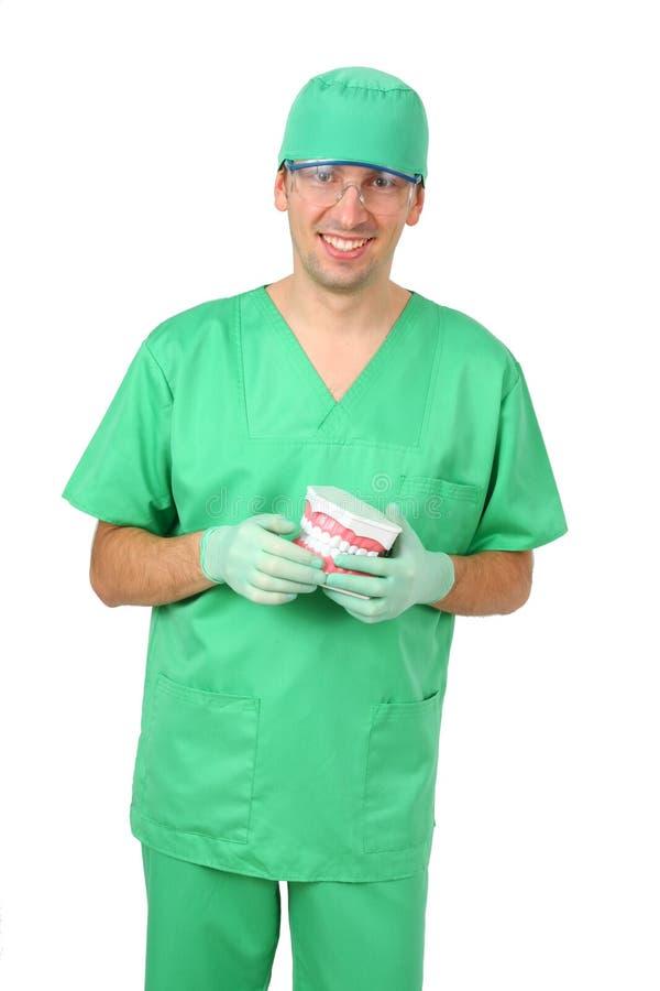 Dentiste affichant un grand modèle de reproduction de Teet images stock