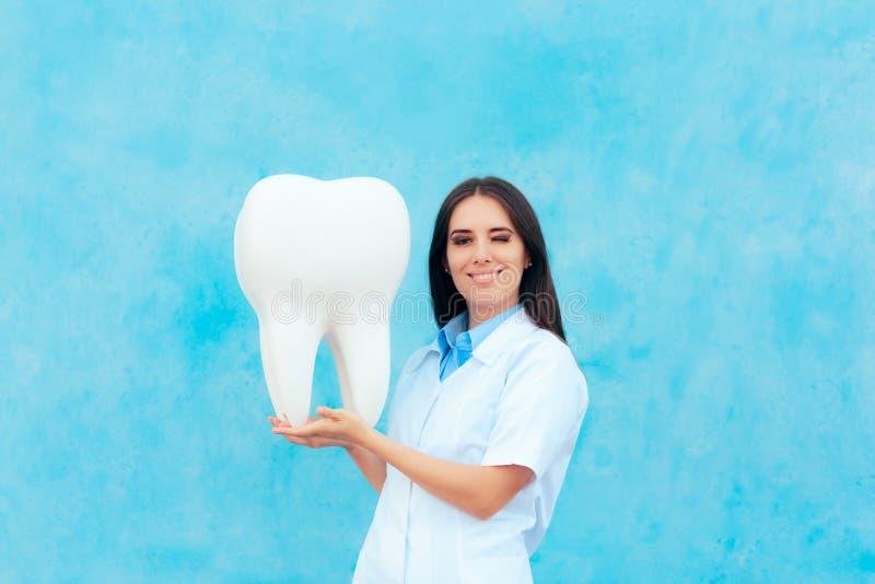 Dentiste féminin dans le manteau blanc avec le grand modèle molaire de dent photos stock