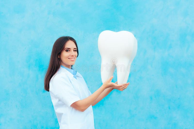 Dentiste féminin dans le manteau blanc avec le grand modèle molaire de dent photo stock
