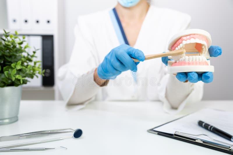 Dentiste féminin expliquer au sujet des dents de brossage dans la clinique, tenant le modèle de brosse à dents et de dents Hygièn photos libres de droits