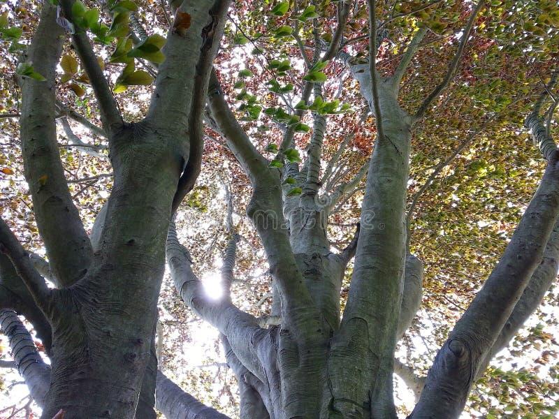 Dentro da árvore fotos de stock