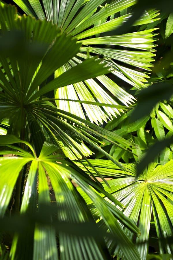 Dentro de la selva foto de archivo