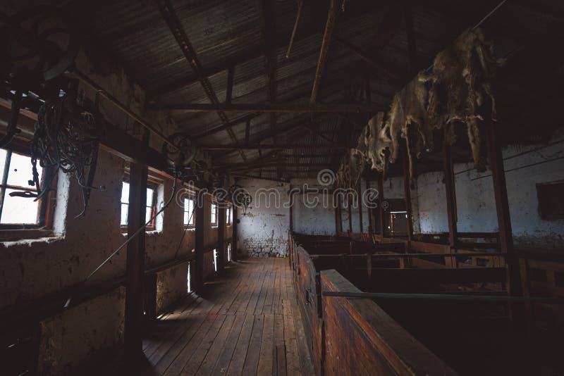 Dentro de um celeiro de madeira em uma exploração agrícola dos carneiros fotografia de stock royalty free