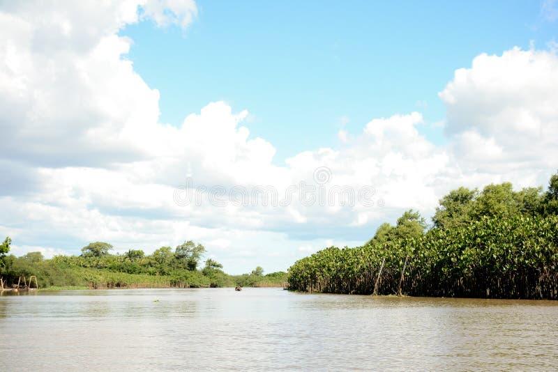 Dentro del delta del río imagenes de archivo