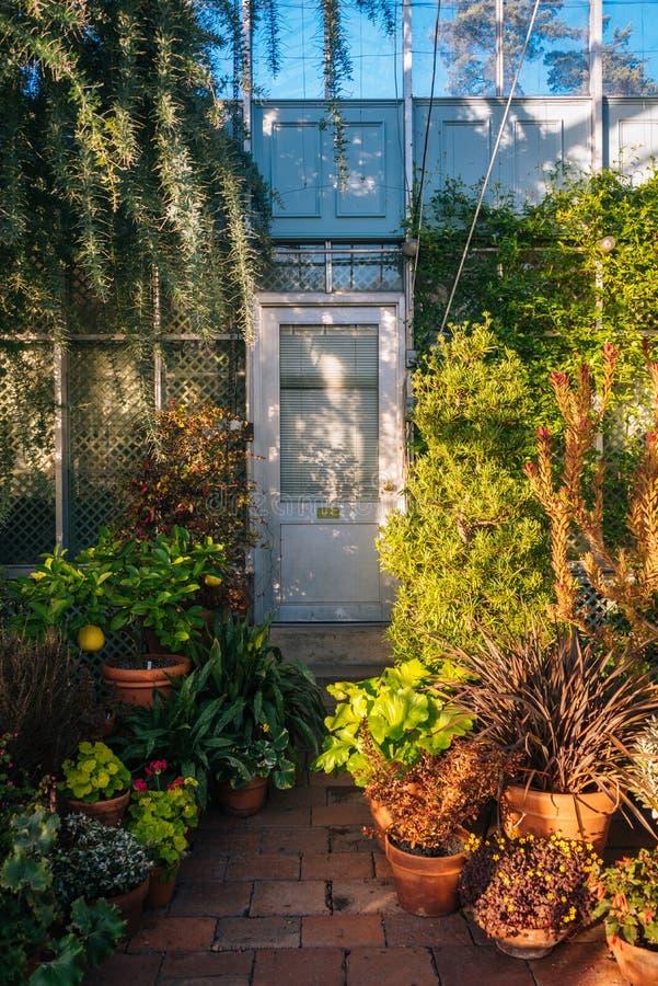 Dentro del invernadero en los jardines p?blicos de la colina de la onda, en el Bronx, New York City fotografía de archivo