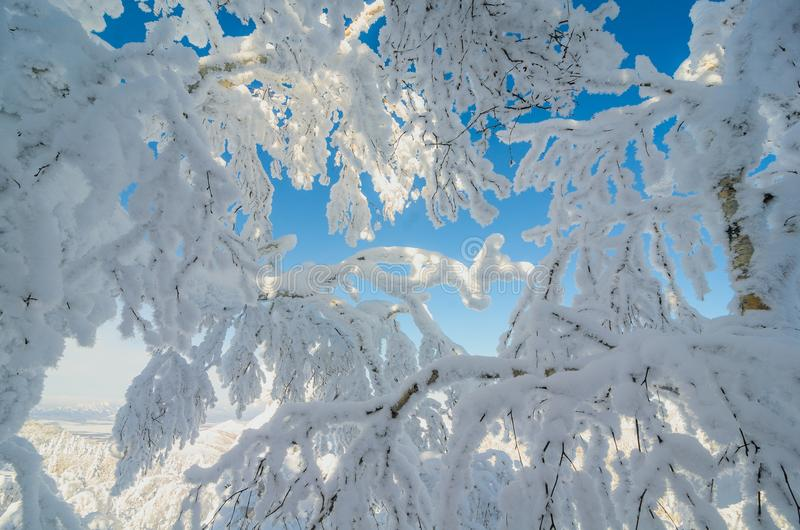Dentro della foresta della neve fotografia stock libera da diritti