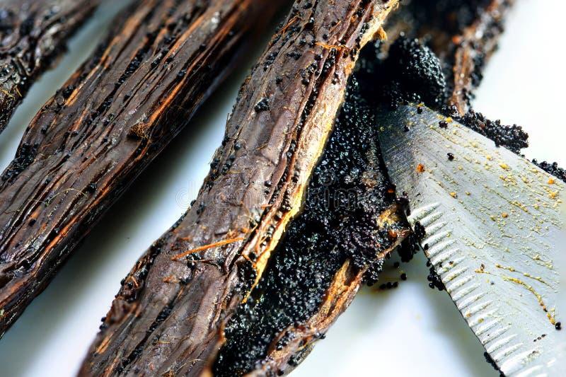 Dentro il baccello della vaniglia, coltello che raschia i semi, macro colpo fotografie stock libere da diritti