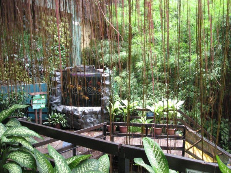 Dentro il oceanarium, parco dell'oceano di Manila, Manila immagine stock libera da diritti