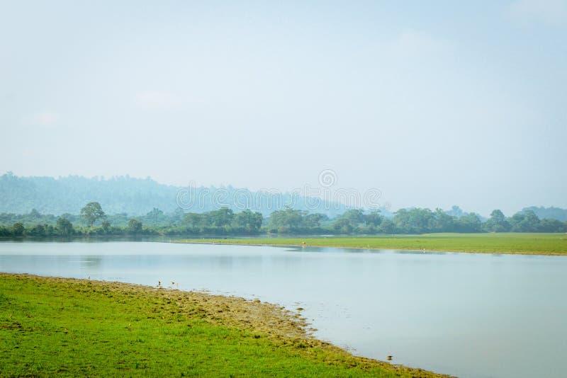 Dentro la vista del parco nazionale l'Assam India di Kaziranga Posto perfetto per la pesca, avventura esotica di estate, festa in immagini stock libere da diritti