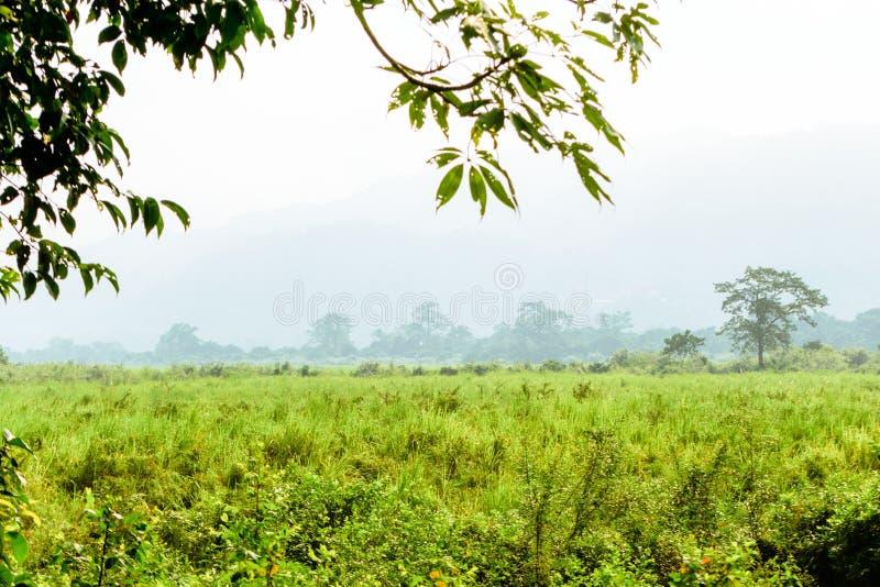 Dentro la vista del parco nazionale l'Assam India di Kaziranga Posto perfetto per la vacanza di festa, avventura esotica di estat immagine stock libera da diritti