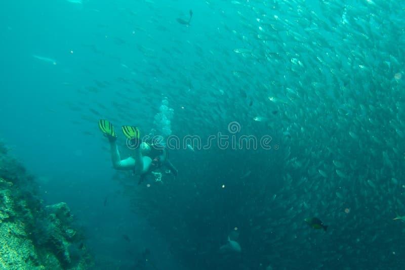 Dentro una scuola del pesce subacquea immagine stock