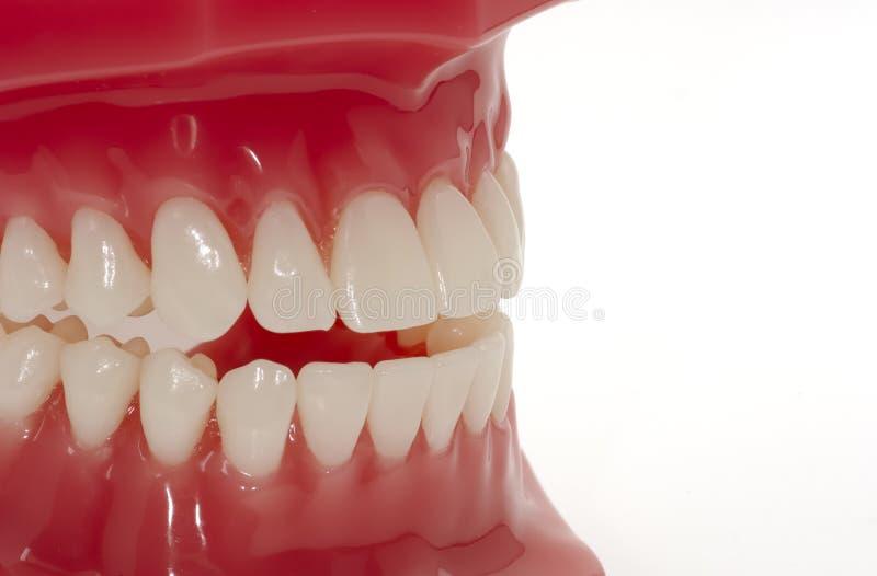 Dents images libres de droits