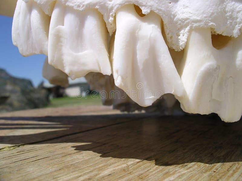 Download Dents animales photo stock. Image du jawline, dents, mâchoire - 741818
