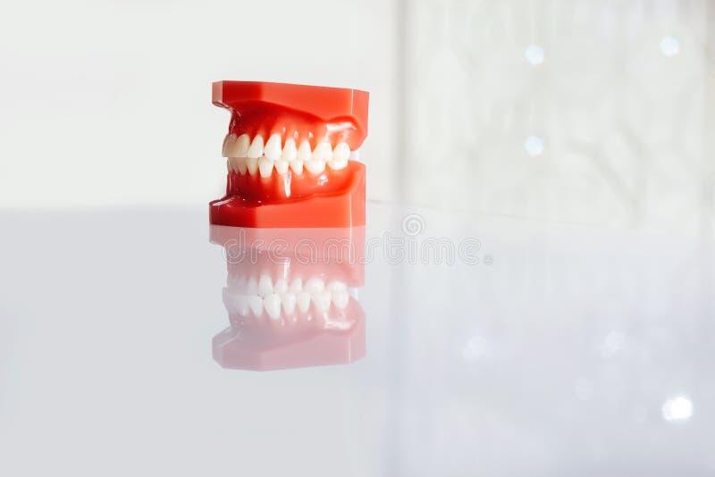 Dents blanches rouges de prosth?tique de m?choire de reproduction de copie de fond de clinique dentaire photos libres de droits