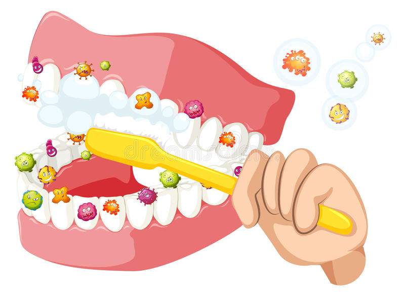 Dents de brossage et nettoyer des bactéries illustration stock