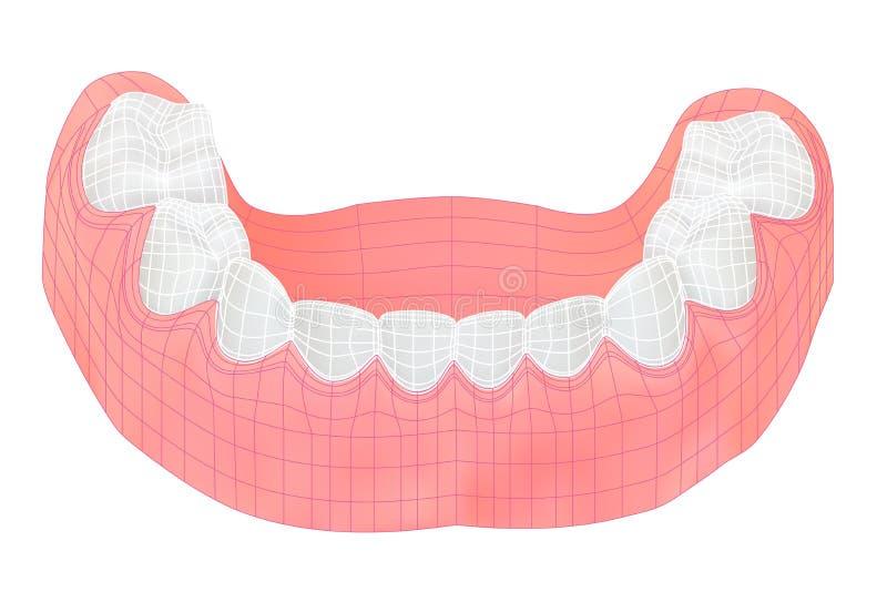 Dents de la mâchoire inférieure illustration stock
