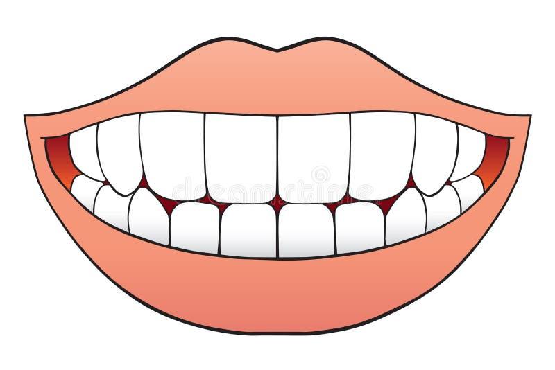 Dents parfaites illustration de vecteur