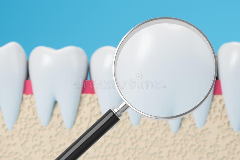 Dents saines avec la loupe illustration de vecteur