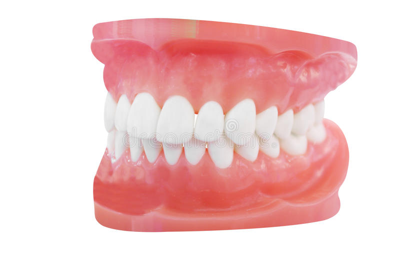 Download Dentures stock image. Image of false, medical, tooth - 21611545