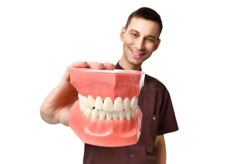 Dentystów zębów doktorskiej dużej atrapy szczęśliwy ono uśmiecha się odizolowywam na bielu obrazy royalty free