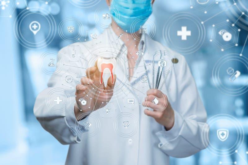 Dentysty działanie z cyfrowym zębu modelem i medyczną strukturą obrazy royalty free