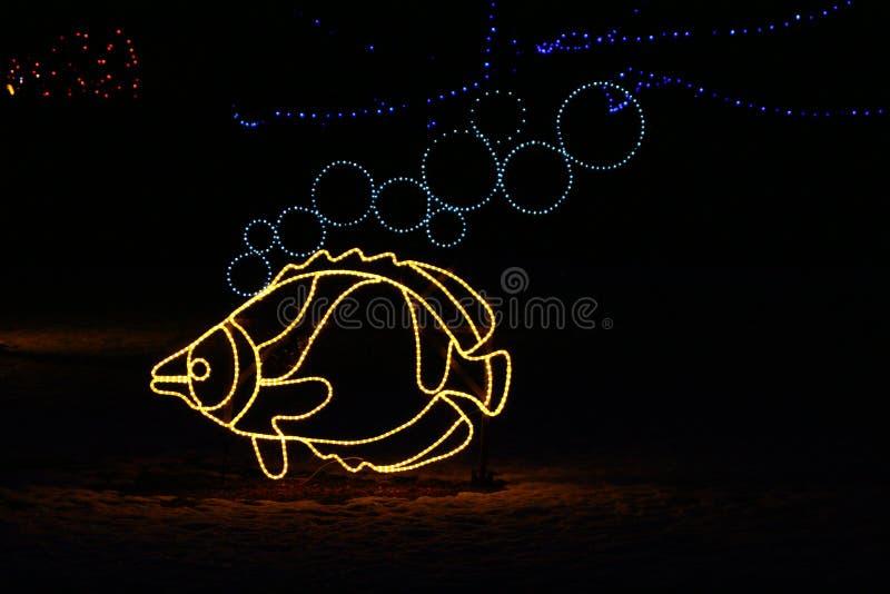 Denver-Zoo-Leuchten - Fische stockfoto