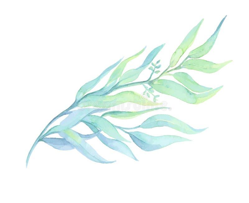 Deocration disegnato acquerello della pianta verde su fondo bianco illustrazione di stock