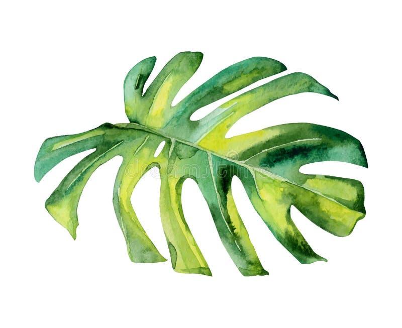 Deocration isolato della foglia della pianta verde dell'acquerello illustrazione vettoriale