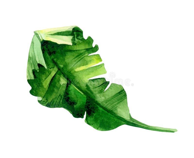 Deocration isolato della foglia della pianta verde dell'acquerello illustrazione di stock