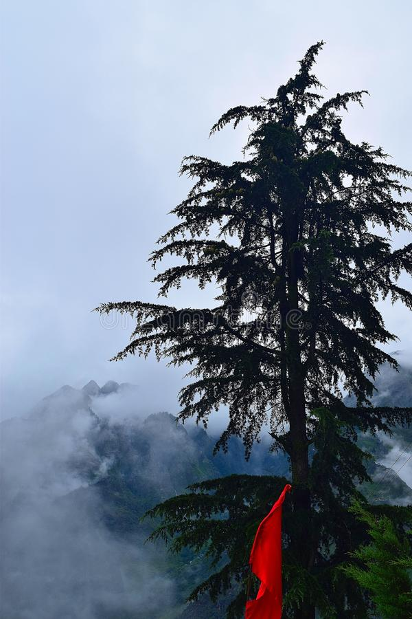 Deodar Tree, Joshimath, Uttarakhand, India. Deodar trees are seen after certain heights in Himalayan mountains. This is photograph of such a deodar tree with stock image