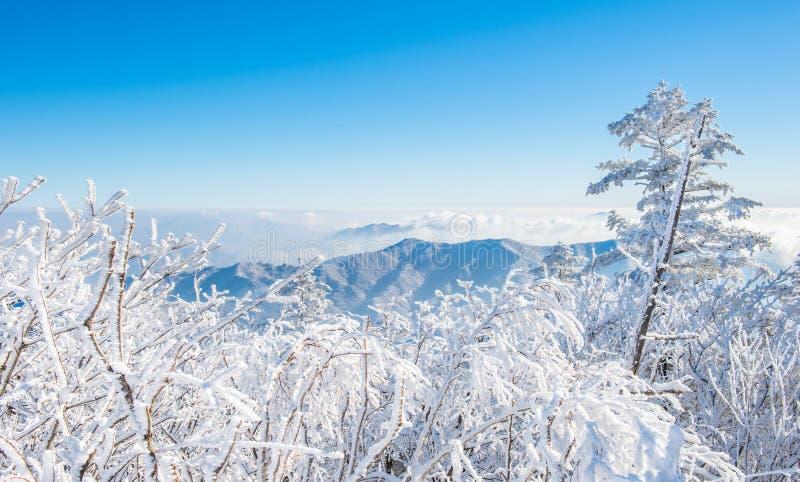 Deogyusan in winter,korea stock photography
