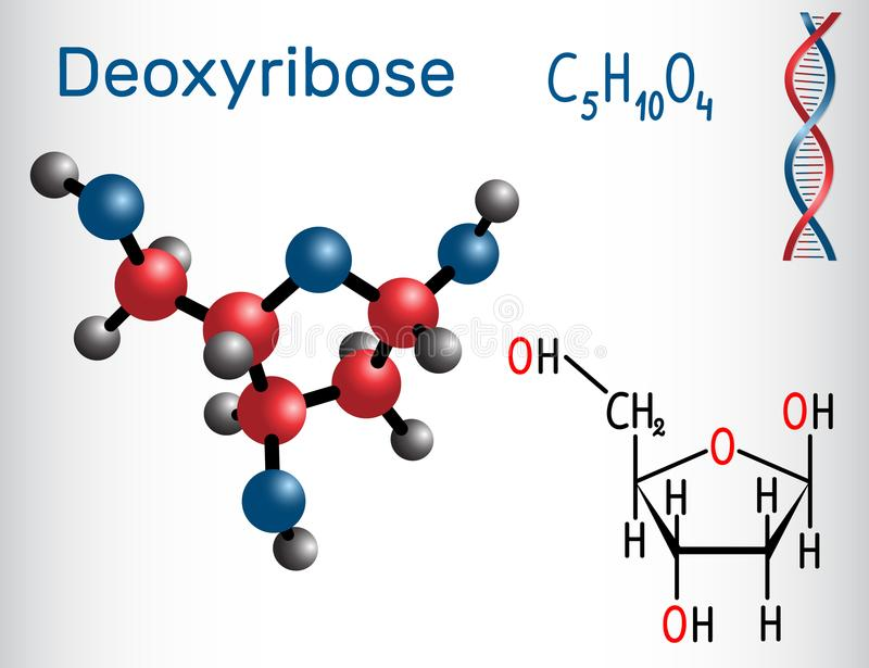 Deoxyribose molecule, it is a monosaccharide deoxy sugar,. It forms part of the backbone of DNA. Structural chemical formula and molecule model. Vector royalty free illustration