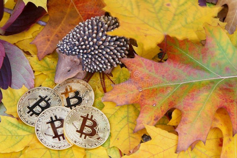 Depósito dourado das moedas de Bitcoin no outono foto de stock