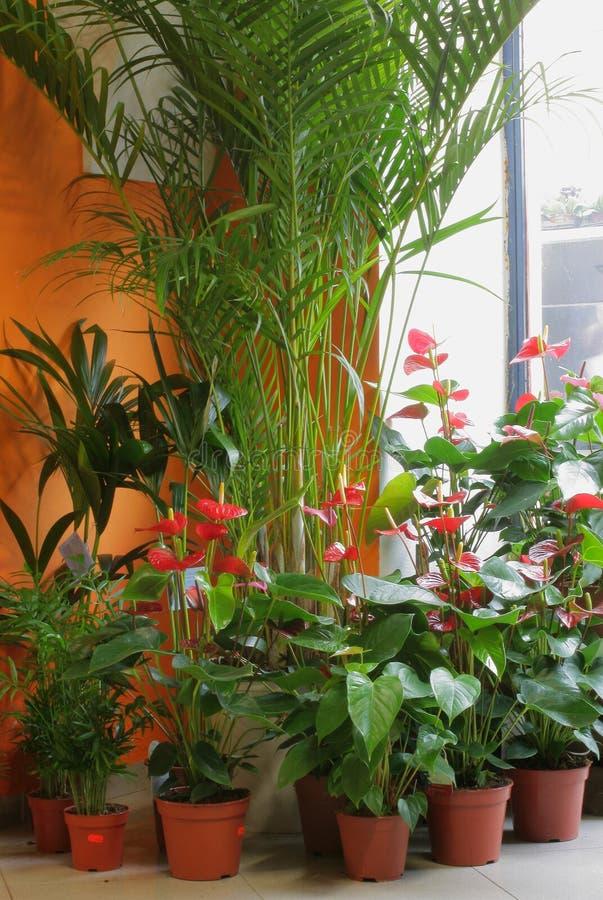 Departamento de florista imagen de archivo libre de regalías