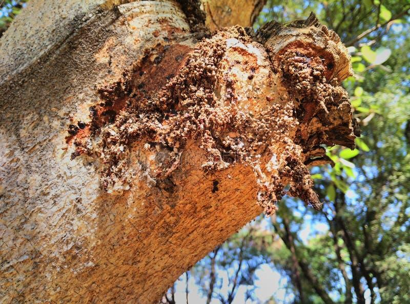 Dependiente del árbol foto de archivo