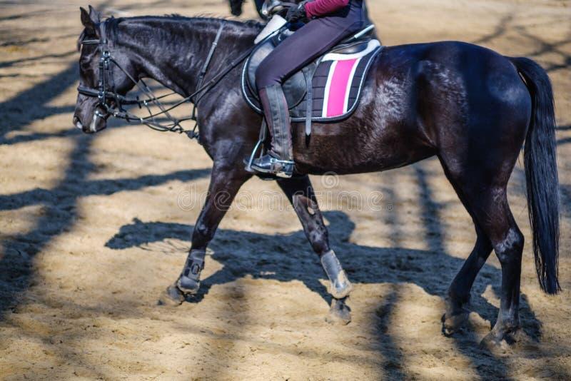 Deporte ecuestre animal del jinete del caballo, silla de montar fotografía de archivo libre de regalías