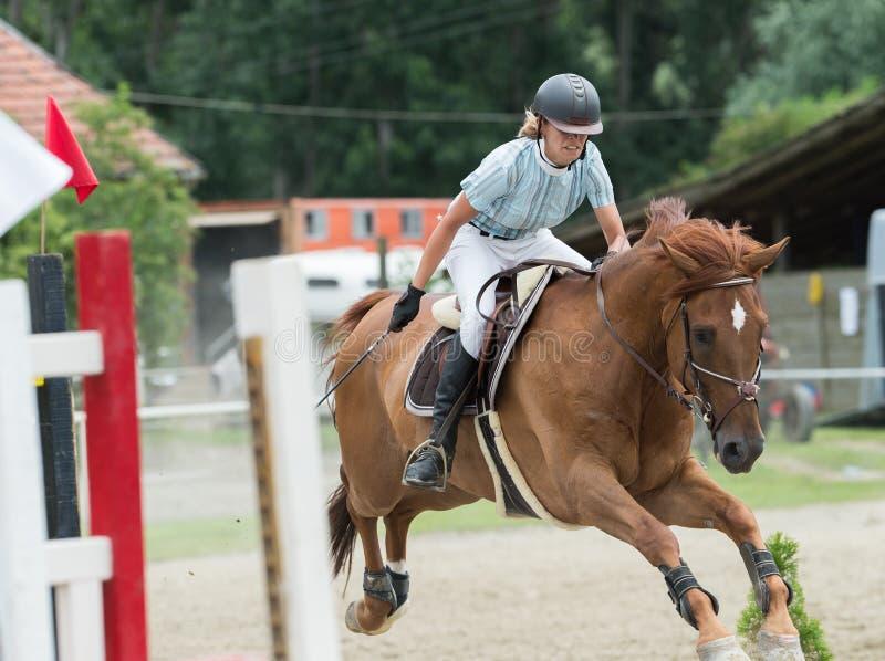 Deportes ecuestres, caballo que salta, salto de la demostración fotografía de archivo