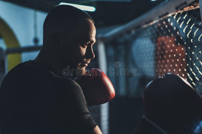 Deportista muscular en guantes de boxeo imagen de archivo