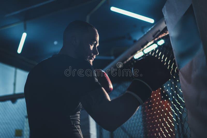 Deportista muscular en guantes de boxeo fotos de archivo libres de regalías
