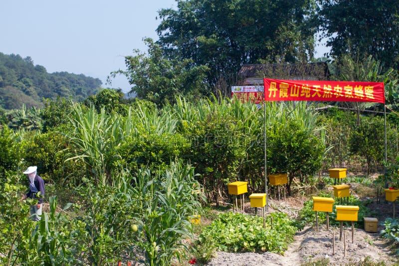 Depositário chinês da abelha fotos de stock royalty free