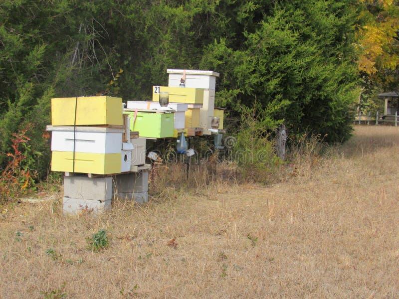 Depositário da abelha fotografia de stock