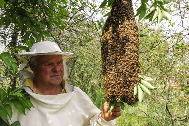 Depositário da abelha com um enxame das abelhas imagem de stock royalty free
