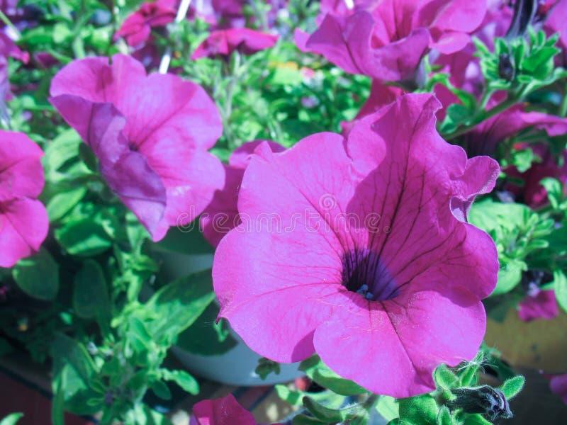 Deposito di fiore nel mercato dell'agricoltore immagine stock
