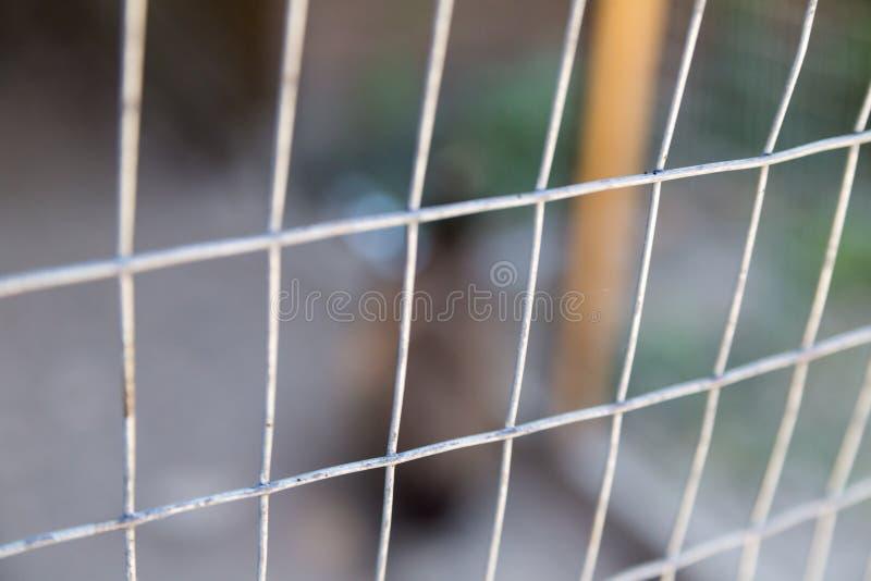Depredadores peligrosos del fondo de la textura de la protección de rejilla abstracta de la pajarera imagen de archivo