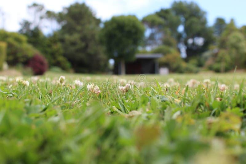 Depresja mlejący strzał trawa i kwiaty zdjęcie stock