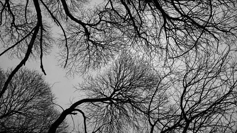 Depressieve bomen royalty-vrije stock fotografie