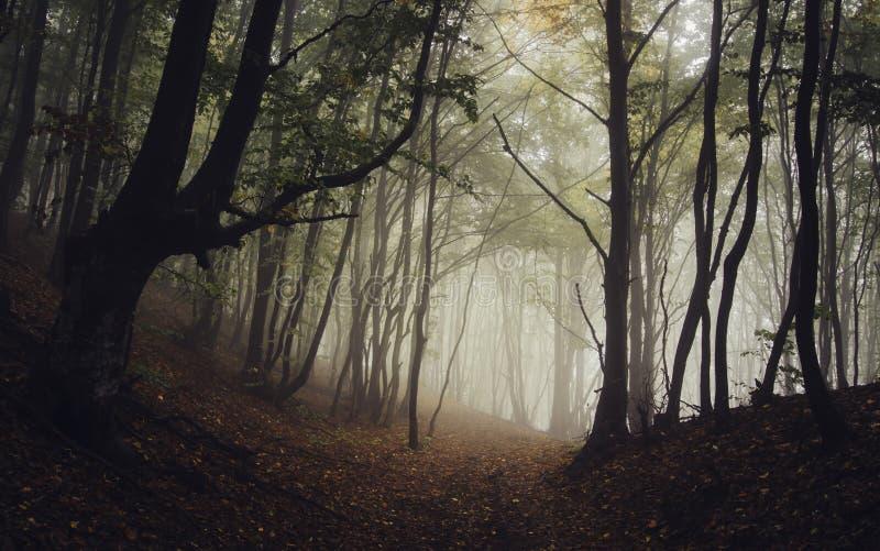 Depressione del percorso una foresta misteriosa scura con nebbia in autunno fotografie stock libere da diritti
