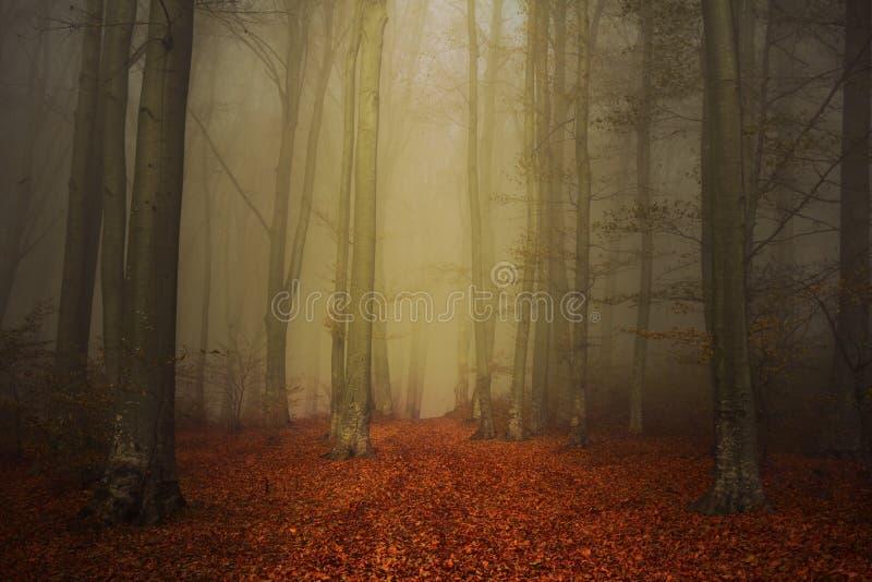 Depressione del percorso una foresta sconosciuta con nebbia in autunno immagine stock