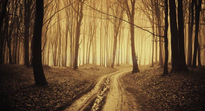 Depressione della strada una foresta scura con nebbia fotografie stock