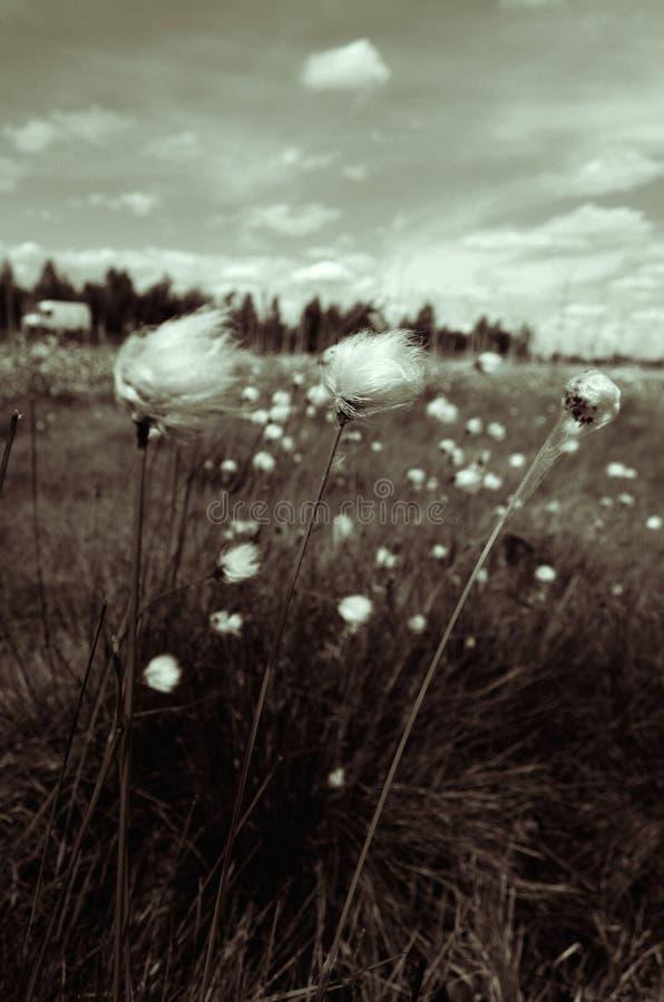 Depressive flower royalty free stock image